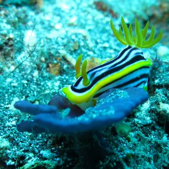 snorkeling-padang-bay