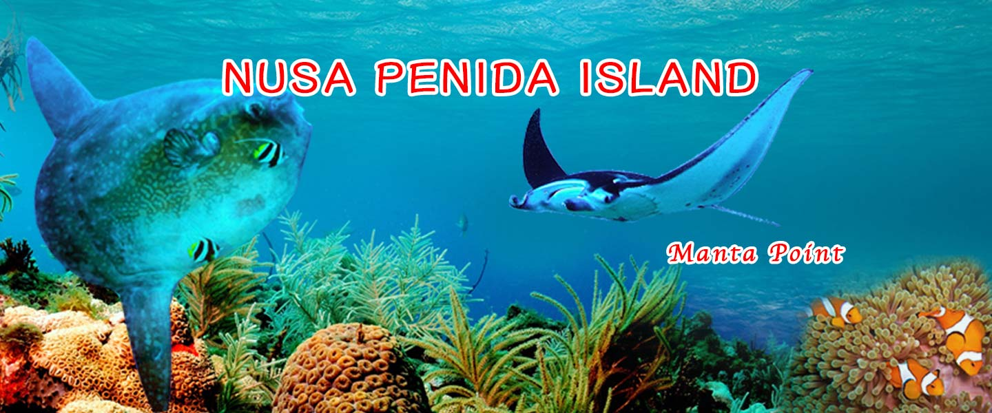 home-page-nusa-dua-point