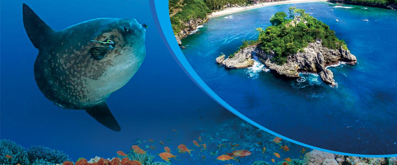 Nusa Dua Dive
